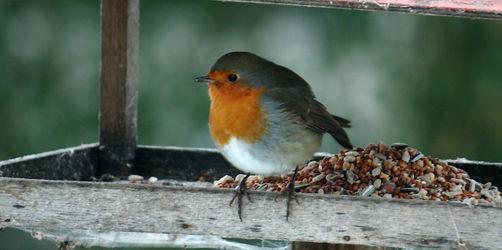 Vögel füttern, Nistkästen bauen - So geht's richtig