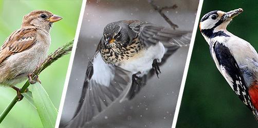 Kennt ihr Amsel, Drossel, Fink und Co.? Macht mit beim Vogel-Quiz!