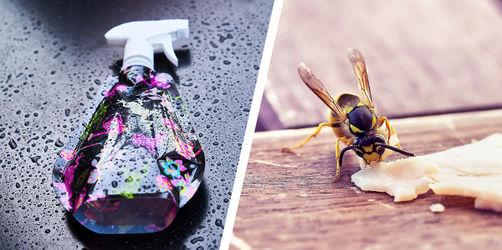 Lästige Wespen: Dieser Trick hilft endlich richtig!