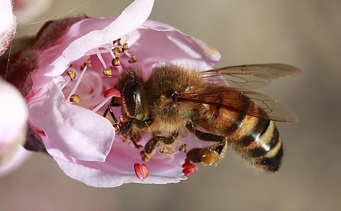 """""""Rettet die Bienen"""": Alle Infos zum Volksbegehren"""