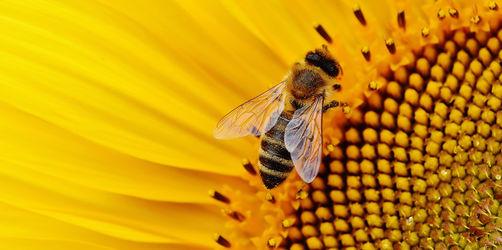 """""""Rettet die Bienen"""": Die wichtigsten Fragen und Antworten zum Volksbegehren"""