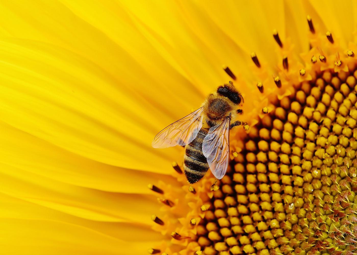 """Rettet Die Bienen: """"Rettet Die Bienen"""": Die Wichtigsten Fragen Und Antworten"""
