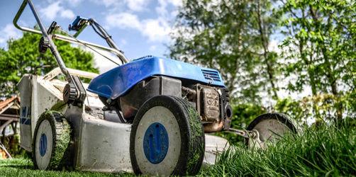 Der Frühling steht vor der Tür: Welche Gartenarbeit muss jetzt erledigt werden?