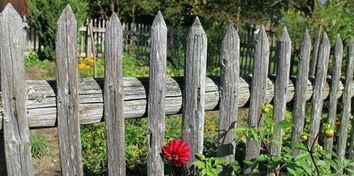 Streit mit den Nachbarn: Was ihr im Garten dürft und was verboten ist