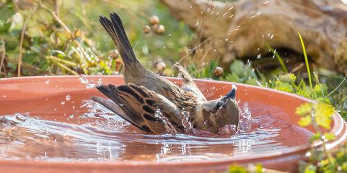 Wasserstellen dringend nötig: So helft ihr Vögeln und Co. in der Sommer-Hitze