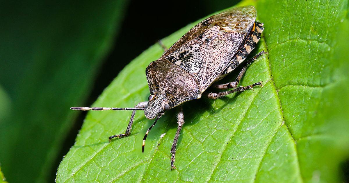 Giftige Käfer In Deutschland