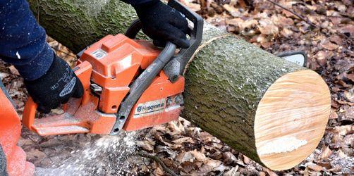 Brennholzversorgung en gros: Geht das als Privatmensch?