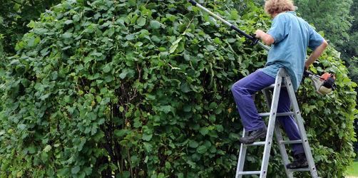 Hecken und Bäume bis Sonntag schneiden: Sonst drohen diese Strafen