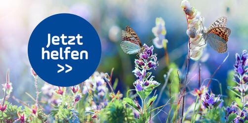 So helft ihr Schmetterlingen! Indras Tipps für Balkon und Garten