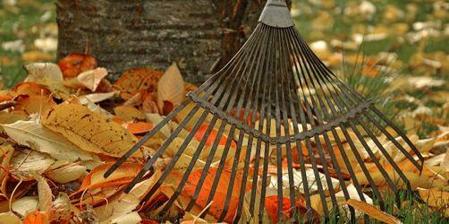 Tipps für Haus und Garten: Wohin mit dem bunten Herbst-Laub