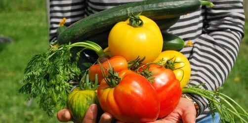 Startschuss für den Gemüsegarten: Welches Gemüse kann jetzt angepflanzt werden?