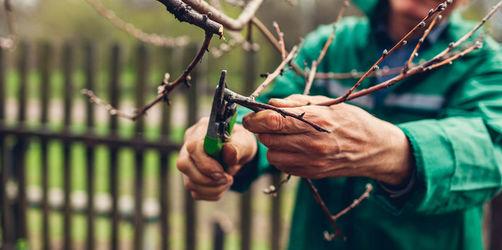 Erste Frühlingsmomente: Diese Dinge könnt ihr im Februar im Garten machen