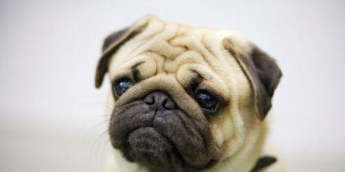 Tierisch teuer - Versicherungen für Haustiere sind zu teuer