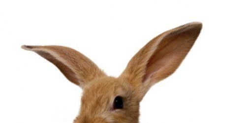 Freigehege für Kaninchen- und Meerschweinchen jetzt winterfest machen