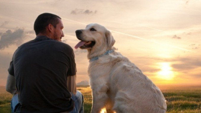 So viel kostet ein Haustier im Laufe seines Lebens