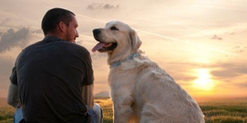 Überflüssig: Krankenversicherung für Haustiere