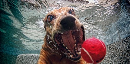 Seehund? - So verrückt sehen Hunde unter Wasser aus