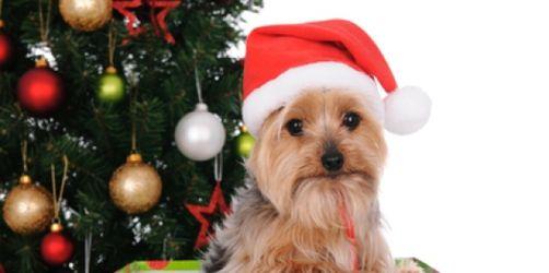 Deutscher Tierschutzbund: Nur Plüschtiere gehören unter den Weihnachtsbaum