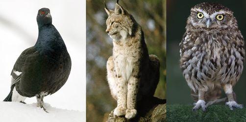 """Tag des Artenschutzes: Diese Tiere sagen in Bayern vielleicht bald """"Servus"""""""