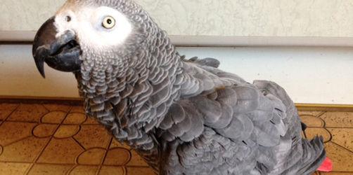 Papagei Baze aus dem Bayerischen Wald trällert ANTENNE BAYERN