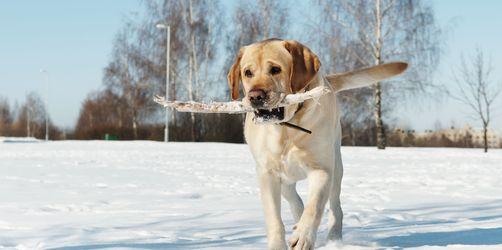 Frost und Kälte: Das ist jetzt wichtig für euer Haustier