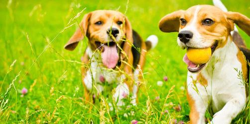 Ein dreifaches Wuff auf den Hund - Wir suchen Bayerns gscheidsten Vierbeiner