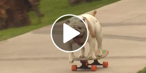 Tierisch gut: Skater-Hund knackt Weltrekord