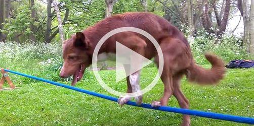 Seil-Tänzer auf vier Beinen: Schauen Sie mal, was dieser Hund kann!