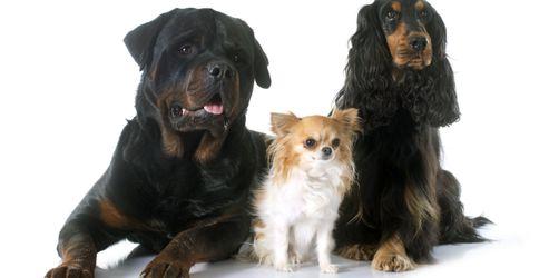 Internationaler Welthundetag: Die besten Videos und leckere Hundekuchen-Rezepte