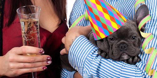 7 Tipps: So schützen Sie Haustiere vorm Silvester-Stress