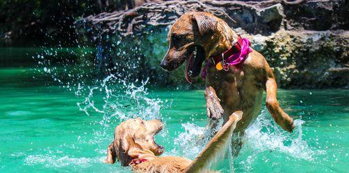 Die schönsten Hunde-Badeseen in Bayern