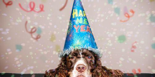 Silvester: So bringt ihr euer Haustier stressfrei ins neue Jahr