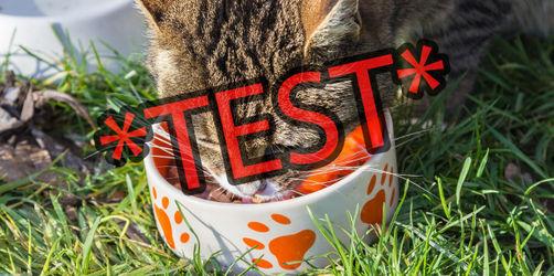 Katzenfutter im Test: Finger weg von diesen Marken