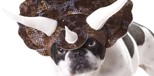 Faschingskostüme für eure Haustiere: Star Wars, Dinosaurier und mehr