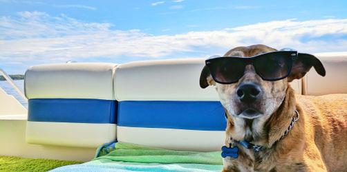 Haustiere im Urlaub - Zuhause lassen oder mitnehmen?