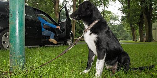 Ausgesetzten Hund entdeckt? Das ist zu tun: