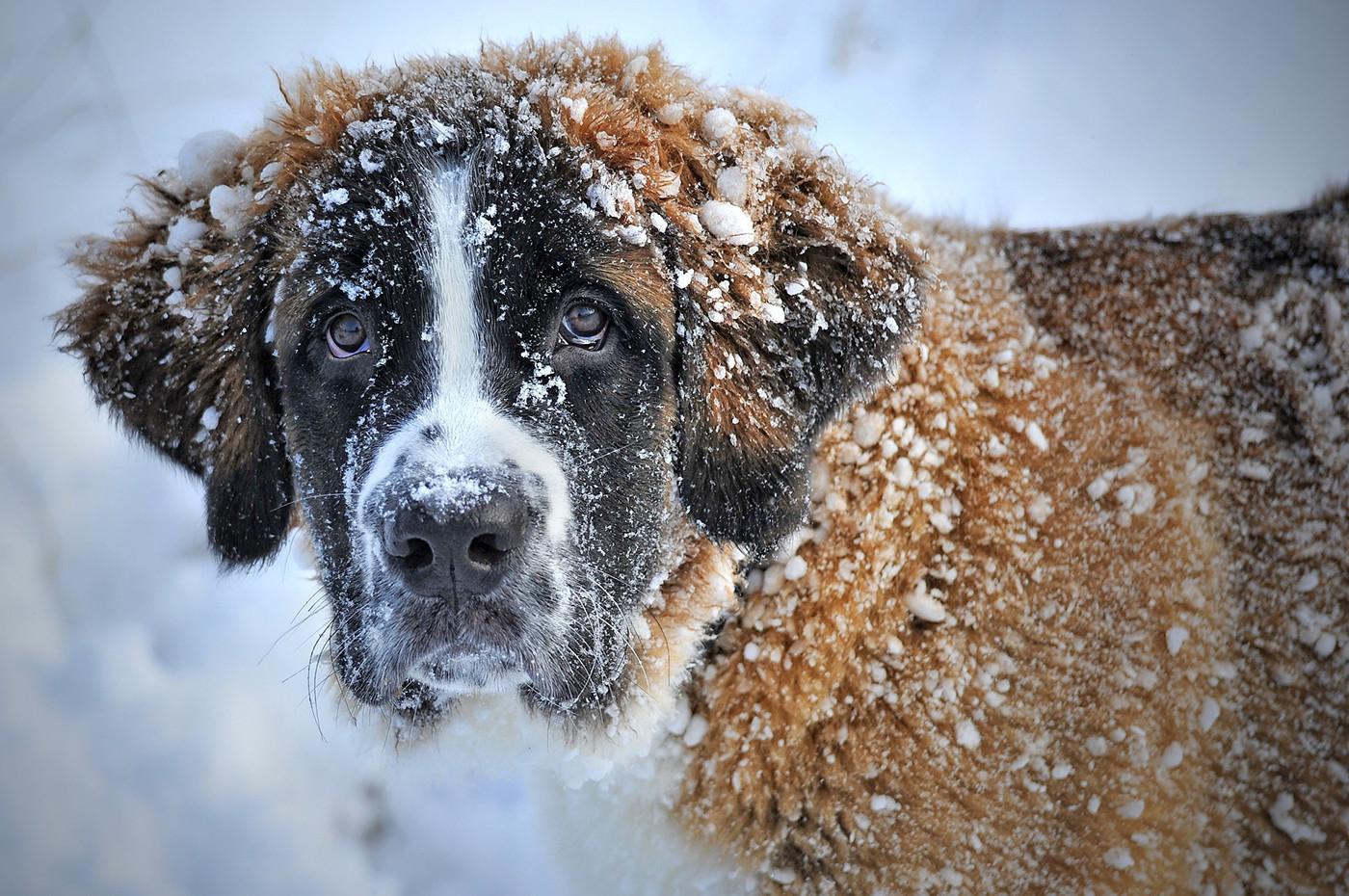 Ab wann ist Hunden eigentlich kalt? Diese Frage lässt sich pauschal nicht beantworten.