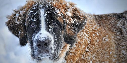 Wenn es draußen wieder kälter wird: Frieren Hunde im Winter?