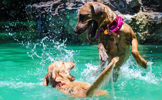 Planschen mit vier Pfoten: Die schönsten Hunde-Badeseen in Bayern