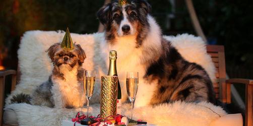 Böllerlärm zu Silvester: So bringt ihr euer Haustier stressfrei ins neue Jahr