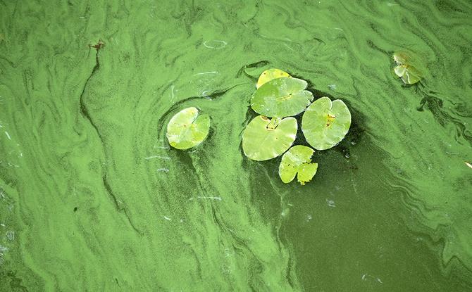 Tote Hunde wegen Blaualgen? In diesen Seen in Bayern ist Baden schon verboten