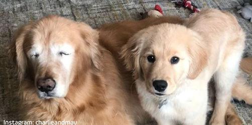Ziemlich tierische Freunde: Blindenhund für blinden Hund