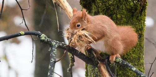 Schneewinter: Viele Wildtiere leiden unter dem eisigen Wetter