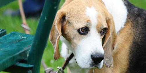 Tödliche Hunde-Krankheit aufgetaucht: Ist Bayern in Gefahr?