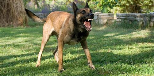 Keine schlechte Erfahrung, trotzdem Furcht: Daher kommt Angst vor Hunden