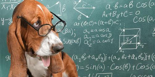 Bellendes Genie? Welche Hunde besonders intelligent sind