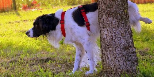 Neue Strafe für Tierhalter: Wer in dieser Stadt Hunde-Pipi nicht wegputzt, zahlt!