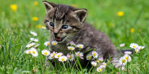 Neue Stubentiger-Studie: Das machen eure Katzen draußen wirklich...