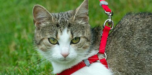 Juristen warnen und fordern: Katzen müssen an die Leine!