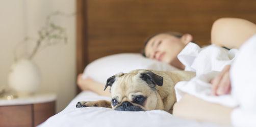 Tierisch guter Schlaf: Mit diesen Gefährten schlafen Frauen am besten